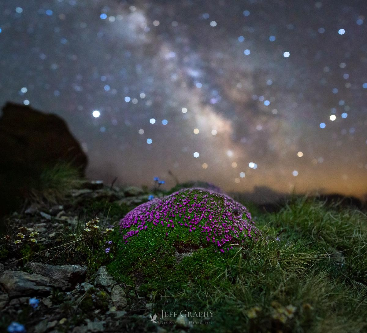 Une Silène sous les étoiles