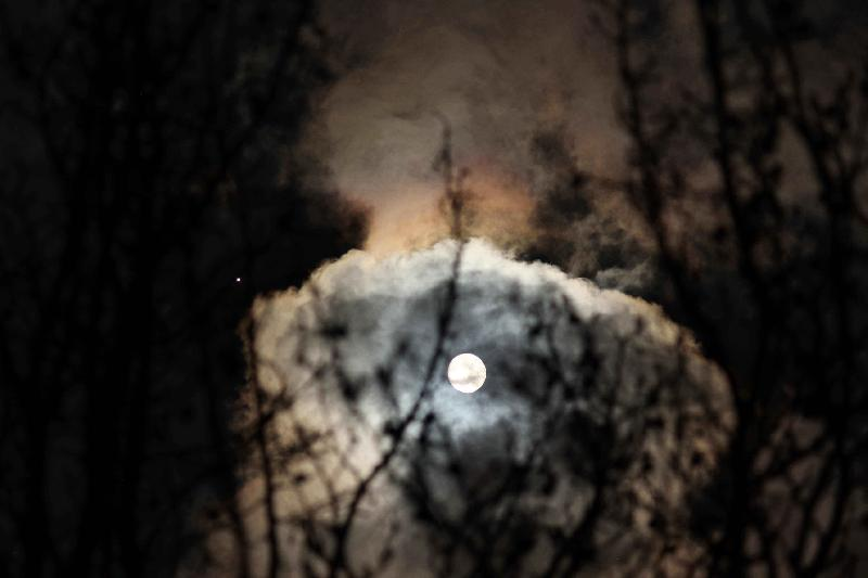 Lune danse avec les bourgeons et Jupi observe