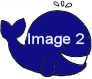 5ab8ae02cf121_baleinebleue_marque.jpg.b6caca7fe7904294a3a93d6f4dced993.jpg