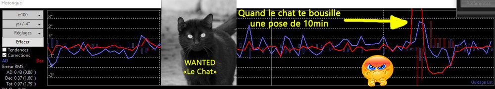 le chat copie.jpg