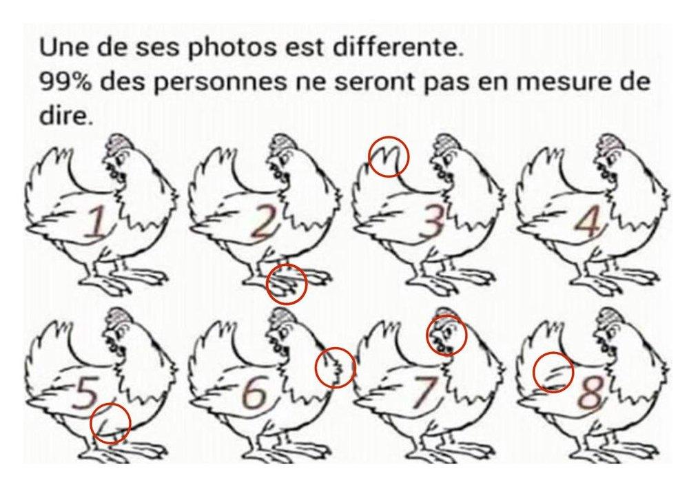 poules.thumb.jpg.89630a0620abf4e469ca78d89ef9eb2f.jpg