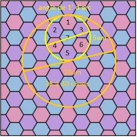 sur-echantillonage-oeil_hexagonal.jpg.6826aff2a2bbfe623476c6145cbffe68.jpg